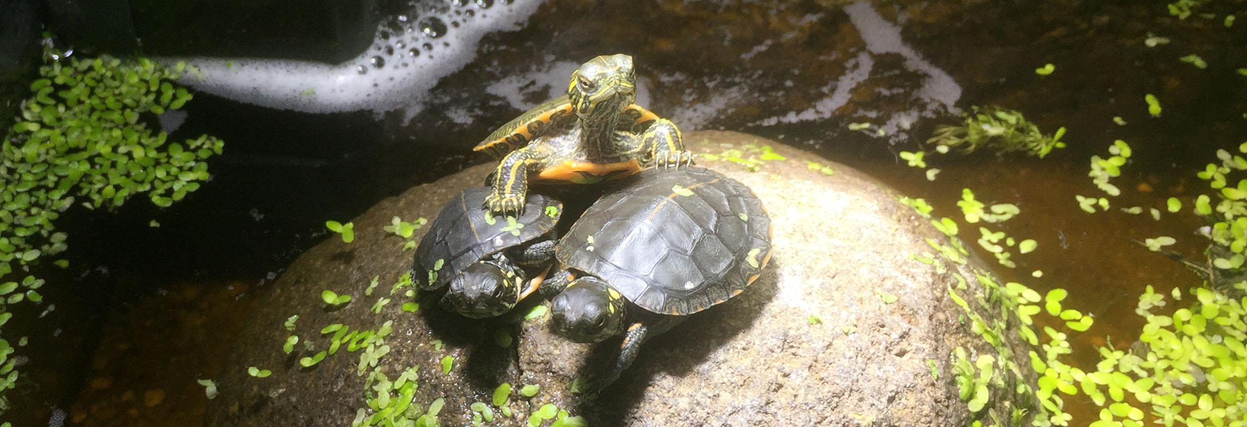 schildkröte kaufen reutlingen