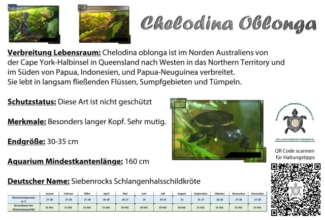 chelodina oblonga Siebenrock Schlangenhals Halswendler Aquariumschild Schild Temperaturen Tabelle HID Beleuchtung Verbreitung