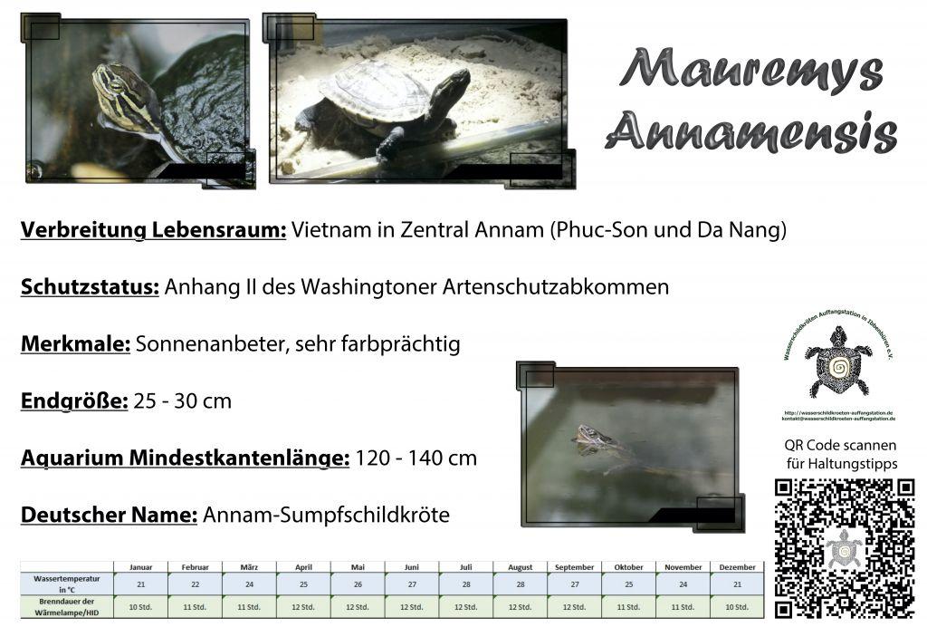 Mauremys annamensis Annam Sumpfschildkröte Temperatur Temperaturentabelle Brenndauer Leuchtdauer HQI HID Metalldampflampe Verbreitung Größe Aquarium deutscher Name