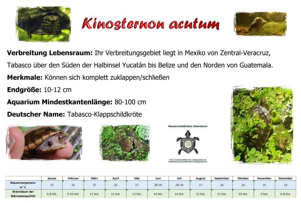 Aquariumschild Kinosternon acutum A5 klein
