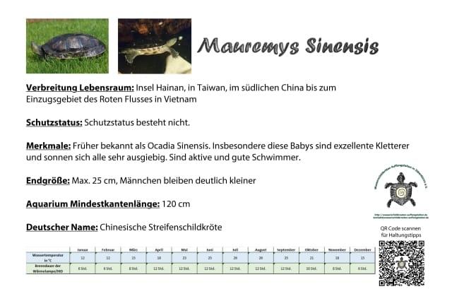 Mauremys Sinensis A5 info schild