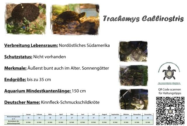 trachemys callirostris A5 info schild